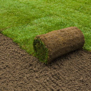 lawn turf roll out grass